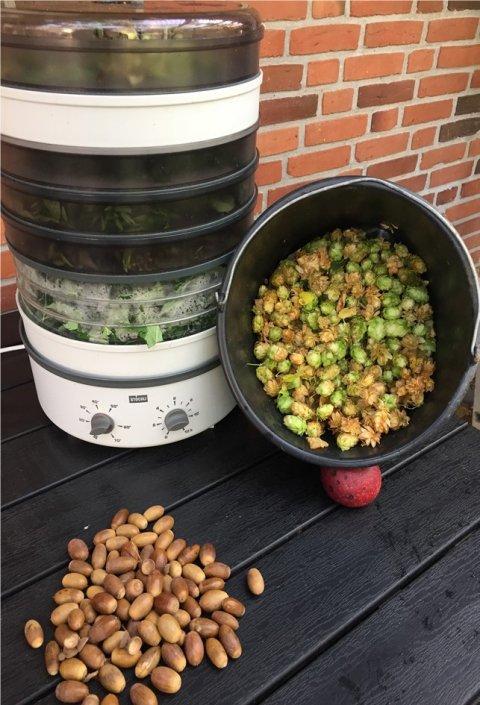 Tørring af krydderurter