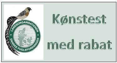 Kønstest