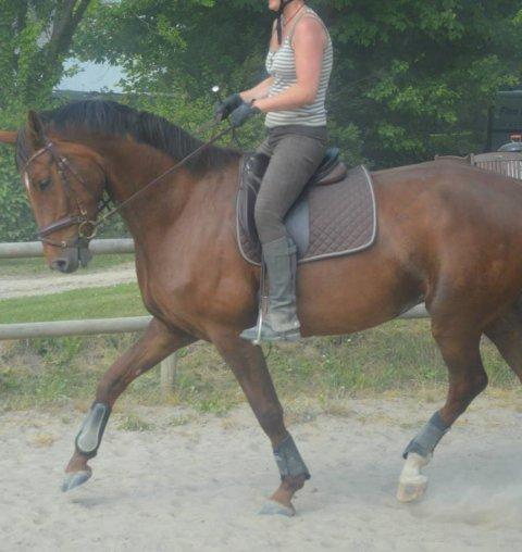 heste stævne hår